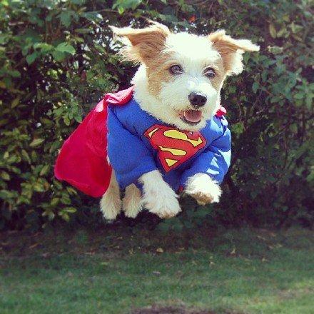 可爱,狗狗,另类图片:奔跑吧,小短腿