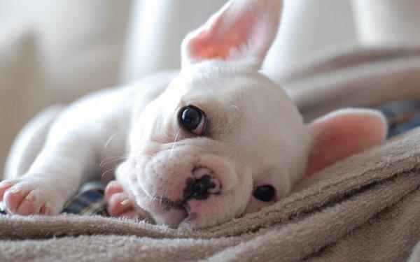 狗狗,另类图片:萌物-可爱图片-七七空间