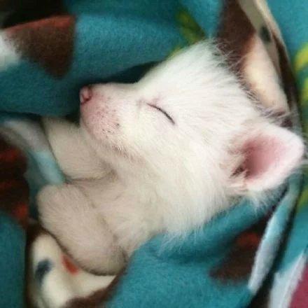 可爱,另类图片:幼崽小狐狸,太萌啦