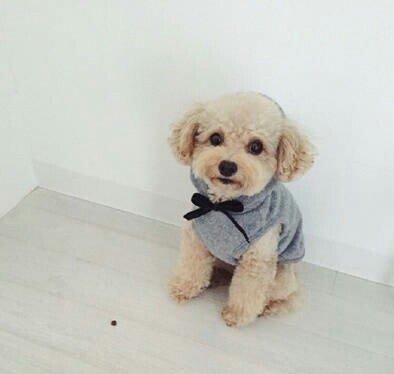 狗狗,另类图片:泰迪!-可爱图片-七七空间