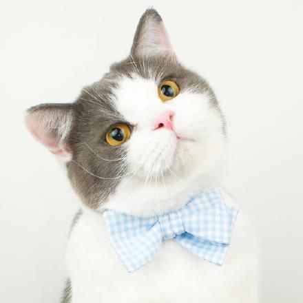 喵星人,另类图片:一只帅帅的肥猫,很酷可做头像-可爱
