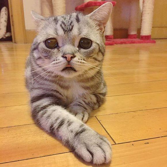喵星人,另类图片:乐仔:喵到一只委屈猫~-可爱图片-777