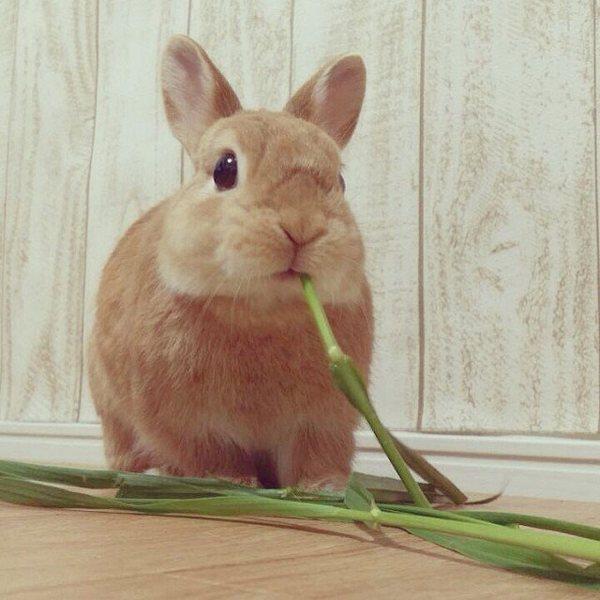 可爱,另类图片:兔子