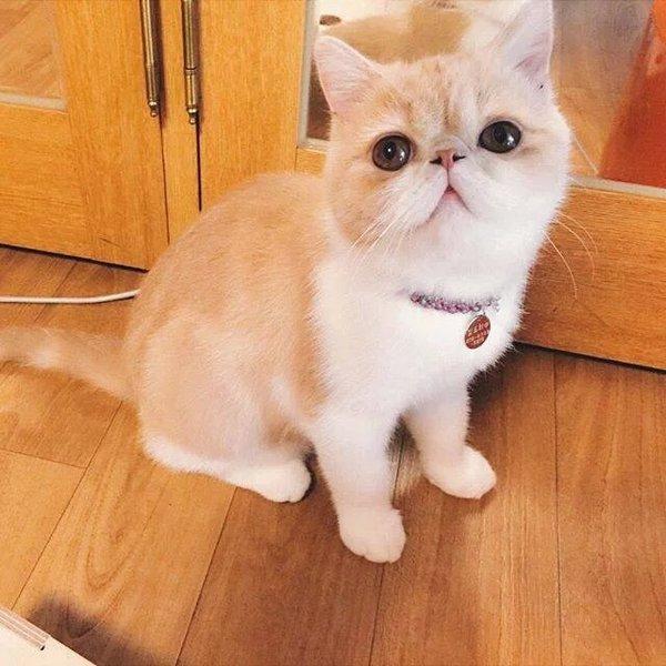 喵星人,另类图片:萌化了的加菲猫72-可爱图片-76