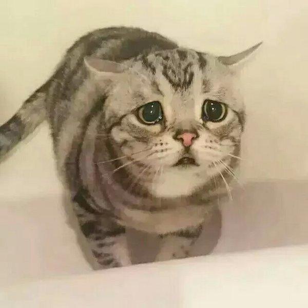 喵星人,可爱,搞笑,另类图片:一只总是一脸委屈相的小萌猫