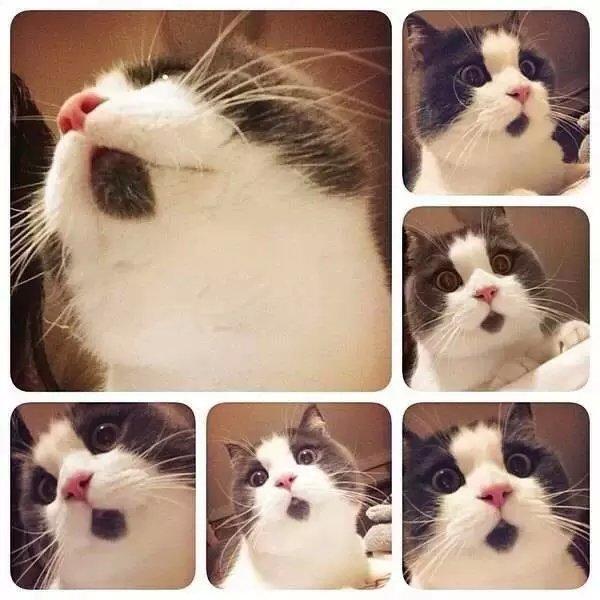 喵星人,可爱,搞笑,另类图片:永远一幅吃惊的表情