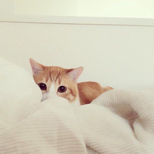 喵星人,可爱,另类图片:猫の方块图集